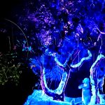 animal-kingdom-night-show-tree-of-life